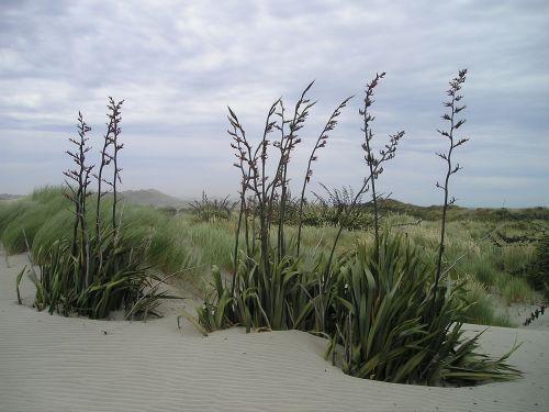Naujoji Zelandija,pietų sala,dykuma,šiaurinis kalnas,šiaurės viršūnė,smėlis