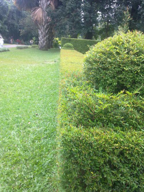 peradeniya, sodas, graži pagrindinė linijos nuotrauka