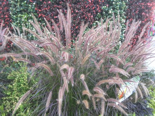augalai, gražus, nuotrauka, Iš arti, parkas, fotografija, kritimas, ruduo, gražus, gražūs augalai