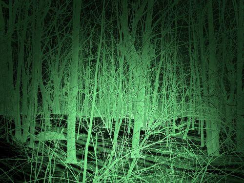fonas, naktis & nbsp, vizija, naktis, tamsi, naktis, ieškoti, yeti, sasquatch, squatchinas, didžiapėdis, didelis & nbsp, pėdos, miškai, miškas, medžiai, aiškumas, fantazija, antgamtinis, mokslas & nbsp, fantastika, siaubas, mitas, legenda, folkloras, naktinio matymo scena