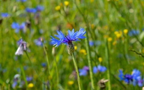 Nikon D 3200, fotografijos, vasarą, vasarą, Vokietija, Vokietija, eilfel, pobūdį, gėlė