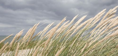 nordfyn,papludimys,vasara,uve,šventė,Danijos paplūdimys,denmark,Smėlėtas paplūdimys,sumos,natūralus,Danijos vasara,dangus,laimė,laisvė,jūra