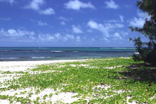 Šiaurinis krantas, vandenynas, pobūdį, Krantas, vandens, jūra, papludimys, smėlis, dangus, kraštovaizdis