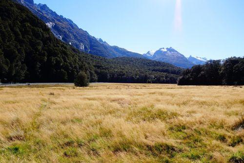 nz,Naujoji Zelandija