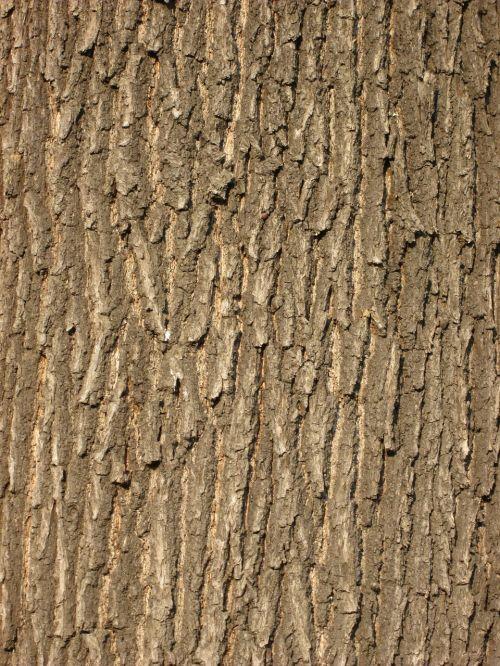 ąžuolo žievė,medžio žievė,žievė,struktūra,modelis,fonas,mediena,miškas