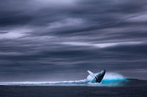 vandenynas,jūra,banga,banginis,lietingą,pusė,dangus padengti,Mėlynasis banginis,laukiniai,nuotrauka