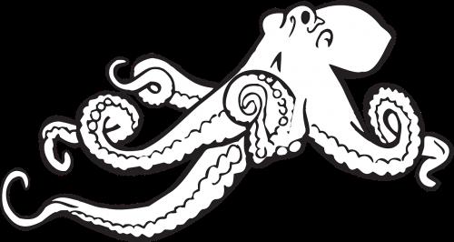 aštuonkojai,eskizas,piešimas,vandenynas,kalmaras,jūrų,egzotiškas,būtybių,laukinė gamta,papludimys,vandens,monstras,meno kūriniai,rankena,nemokama vektorinė grafika