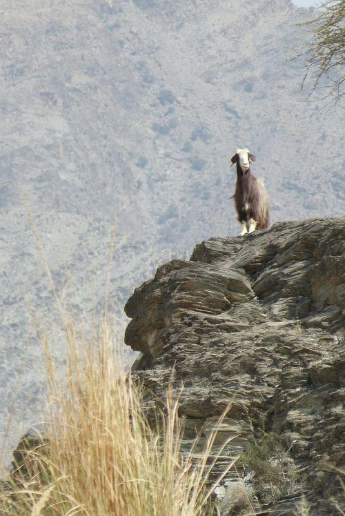 oman,wadi,ožka