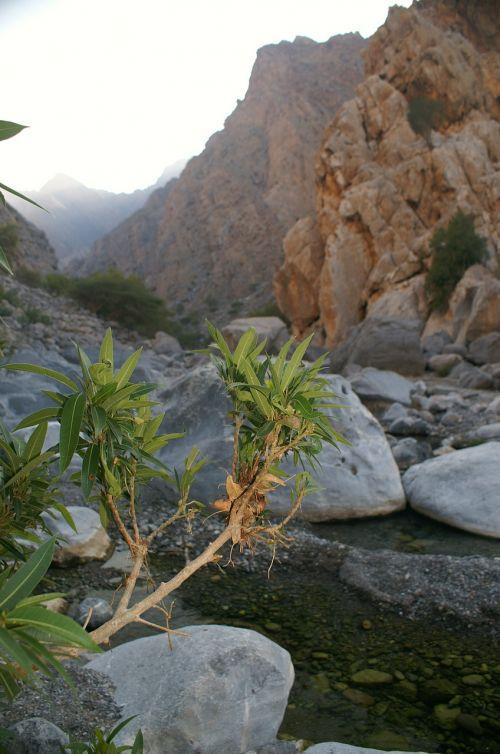 Oman, Wadi, Kalnai