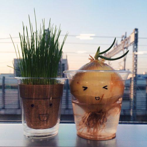 svogūnai, žolė, pasodintas augalas, išraiška, personažai
