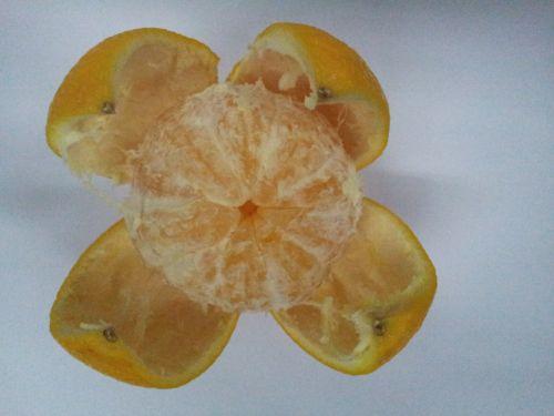 atidarytas, oranžinė, atidarytas oranžinis