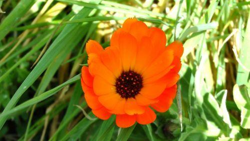 Gėlė,  Gėlės,  Flora,  Augti,  Auga,  Sodas,  Sodai,  Krūmas,  Krūmai,  Sodininkystė,  Sodininkystė,  Žalias,  Augalas,  Augalai,  Botanikos,  Botanikos,  Oranžinė Pavasario Flora