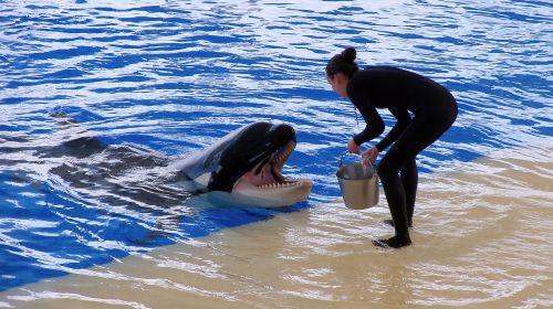 orca,spektaklis,mokymas