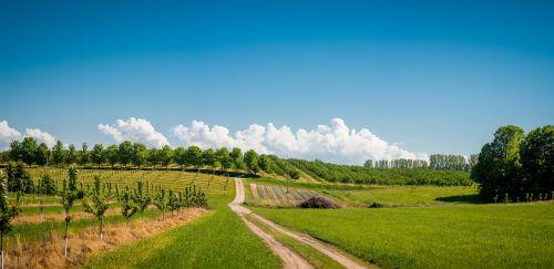 vaisių sodas,ūkininkavimas,vaisiai,Žemdirbystė,ūkis,medis,žalias,gamta,natūralus,sezonas,vaizdingas,peizažas