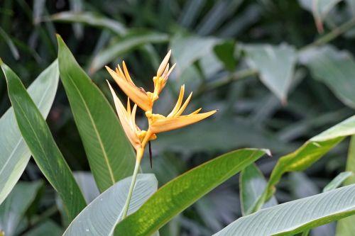 orchidėja,gėlė,laukinė orchidėja,augalas,tropinė orchidėja,žiedas,žydėti