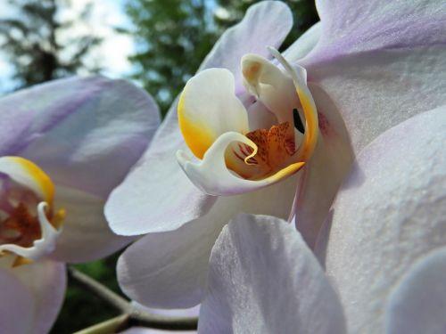 orchidėja,augalas,žiedas,žydėti,gamta,žydėti,balta,egzotiškas,gėlė