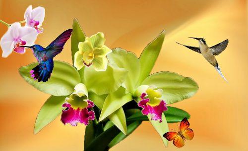 orchidėja, balta orchidėja, geltona, gamta, sodas, gėlės, pavasaris, augalas, drugelis, violetinė orchidėja, spalvinga, alyvinė orchidėja, grožis, gėlė, dekoratyvinė gėlė, orchidinė rožinė, paukštis, orchidėja sujungta, geltona orchidėja, balta, trapi, pavasario gėlės, kraštovaizdis, beija flor, orquidea, dekoratyvinis augalas, hummingbirds, paukščiai