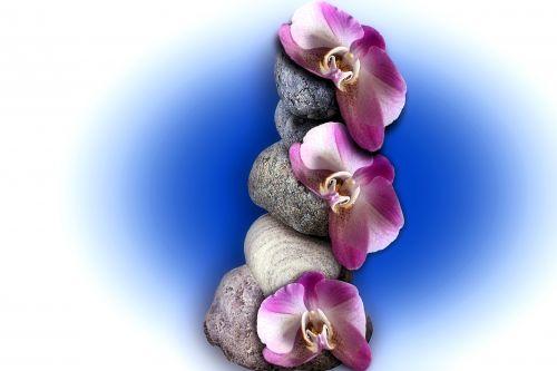 orchidėja, balansas, akmenys, ramus, atsipalaiduoti, gėlė, orchidėjų balansas