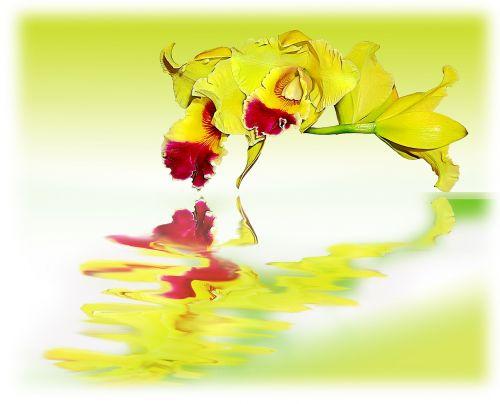 orchidėjos,gėlės,pabrėžia,geltona
