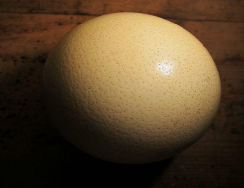 strutis, kiaušinis, lukštas, skylė, tuščia, konteineris, stručio kiaušinio lukštas
