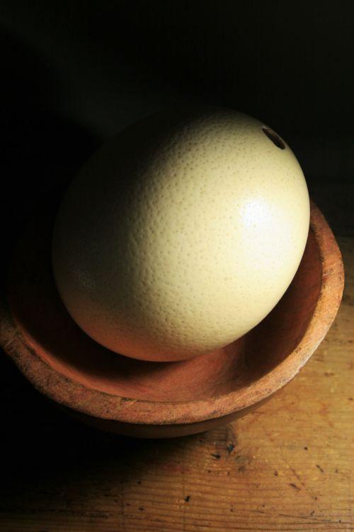 lukštas, kiaušinis, strutis, paukštis, buff, apčiuopiamas, stručio kiaušinio lukštas