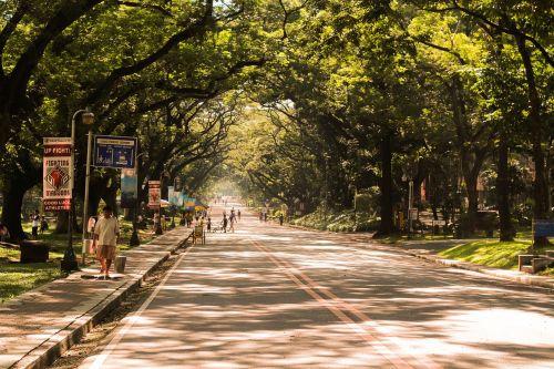 ovalus,gamta,medžiai,Manila