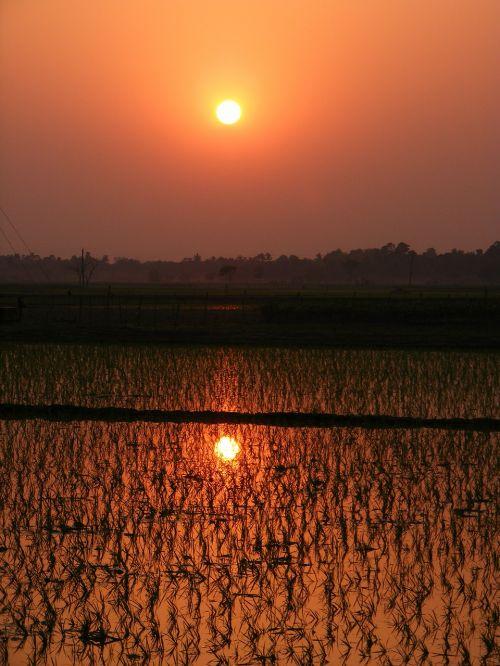 paddy,ryžių paddy,saulėlydis,pasėlių,laukas,Žemdirbystė,žemės ūkio,gamta,šviežumas,derlius,pasėliai,augalai,auginimas,lauke,žemės ūkio paskirties žemė,kraštovaizdis,ūkis,kaimas,ūkininkavimas
