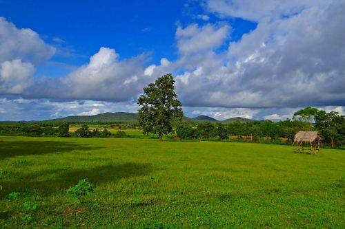 žaliavinis auginimas,sluoksniniai debesys,Hubli-Siris kelias,mundgod,Karnataka,Indija