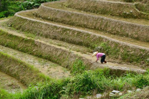 paddy laukai,paddy,laukai,ryžiai,Žemdirbystė,gamta,ūkis,laukas,lauke,kraštovaizdis,kaimas,kaimas,guangxi,Kinija,žalias,Šalis,peizažas,scena,tradicija,tradicinis,ramus,ūkininkavimas,taikus,ganykla,kalnas