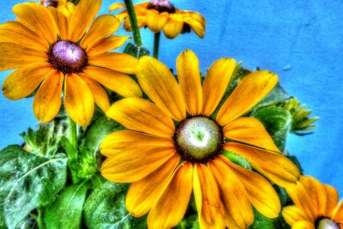 saulėgrąžos, saulėgrąžos, geltona, meno, tapybos, gėlė, gėlės, gėlių, dažytos saulėgrąžos