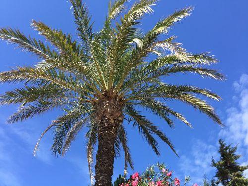 delnas,augmenija,Balearų salos,formentera
