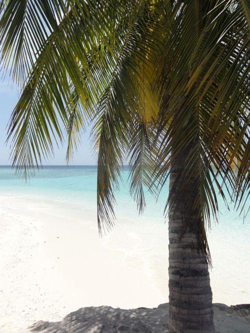 delnas,papludimys,Maldyvai,jūra,šventė,vasara,saulė,Indijos vandenynas,atolas,smėlis,sala,dangus,karibai,kelionė,svajonių šventė,smėlio paplūdimys rojus,atogrąžų,Pietų jūra,nuostabus paplūdimys