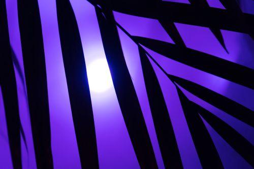 delnas,Neoninė šviesa,neonas,vakarėlis,menas,dirbtinis,lapai,rūkas,dūmai,schemos,neoninės šviesos,šviesa,apšvietimas,lempa,neoninės lempos,vaizdų serija,spalvinga,yukka,vasara,šiluma,difuzinė