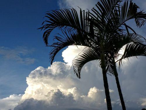 delnas,klimato kaita,debesys,palmės,klimatas,atogrąžų,šventė,karibai,tropikai,vasara,dangus,griauna,kubo debesys,debesys krūva,Persiųsti,grasinanti,debesų danga,audros debesys,audra,gamta,gewitterstimmung,oras,debesų formavimas,dramatiškas,dramatiški debesys,oro temperamentas,debesys formos,dramatiškas dangus,nuotaika,gražus,cloudscape,grasinanti griaustinio perviršio,debesys priekyje,mėlynas