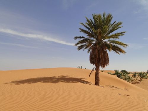delnas,dykuma,Mauritanija