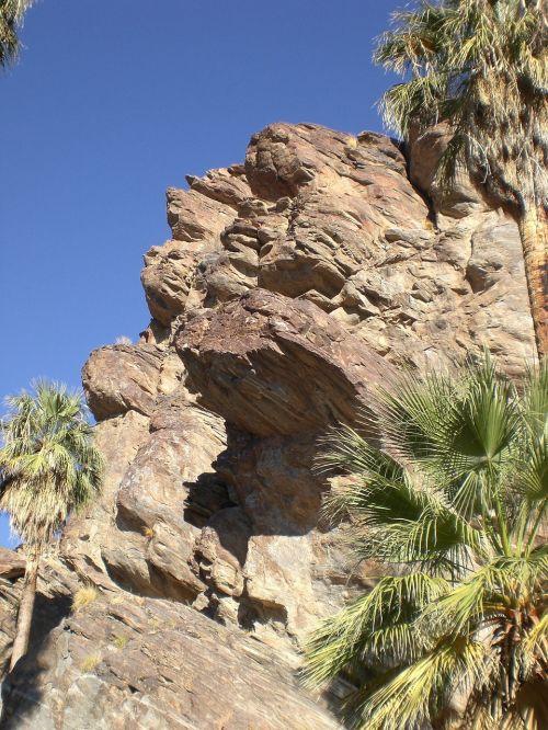 palmės kanjonas,Kalifornija,gamta,palmės,dykuma