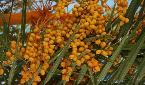 palmių gėlė,farbenpracht,akių gaudytojas