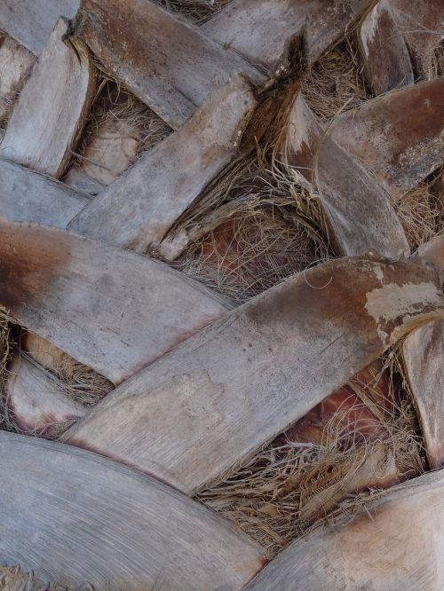 palmių tekstūra,blokuojanti tekstūra,pilka tekstūra,tapetai,fono tekstūra