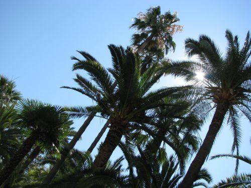 delnus, vasara, gražus, france, palmių & nbsp, medžiai, palmės gražiai, france