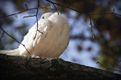 paloma,  birds,  fauna