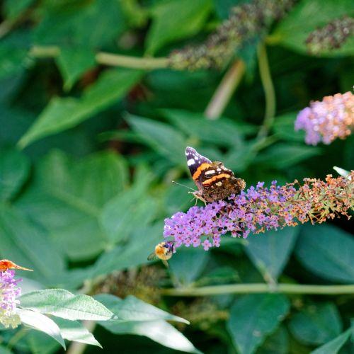 drugelis, gėlė, vabzdys, gamta, žiedadulkės, gyvūnas, flora, botanika, spalvos, vasara, sparnai, drugelis ant gėlės