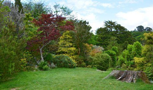 parkas,parklandschaft,nuotaika,gamta,kraštovaizdis,parkai,muckross parkas,Killarney,Nacionalinis parkas,Airija,apskrities kerry,pieva,anglų parkas,sodas,augmenija,Anglų,sodo sodas
