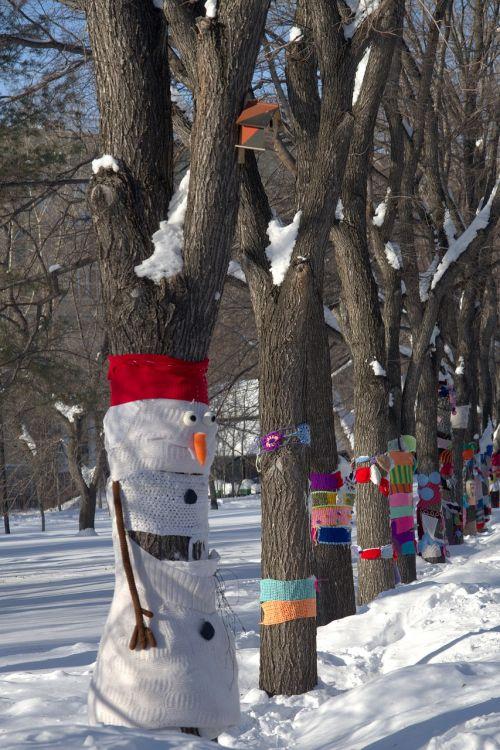 parkas,sniegas,žiema,medžiai,gamta,šaltas,miesto parkas,po sniegu,sniego senis,ruda,saulė,oras