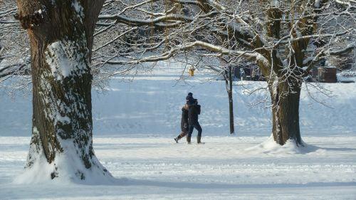 parkas,šeima,sniegas padengtas,lauke,žiema,medžiai,žiemos scenos,šaltas,kraštovaizdis,sniegas