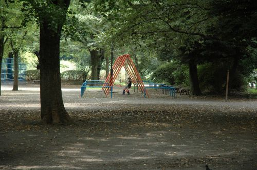 parkas,vasara,Japonija,žalias,nesibaigianti vasara,didelis medis,saulės šviesa,vasaros atostogos