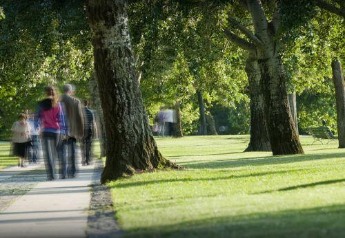 parkas,žmonės,žygiai,pasivaikščiojimas,klajojantis,medžiai,žalias,vaikščioti