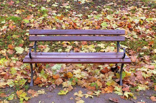 parkas,rudens stendas,stendas,gamta,lapija,poilsis,ruduo,sėdėti,peizažas