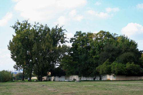 parkas, siena, perimetras, žolė, medžiai, aukštas, parkas su medeliais