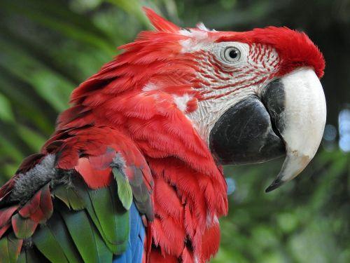 papūga,paukštis,gyvūnas,rašiklis,egzotiškas