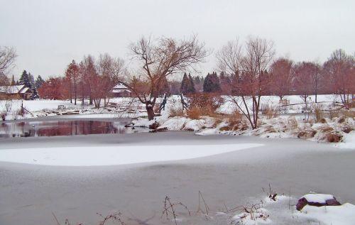 sušaldyta, tvenkinys, ledas, žiema, medžiai, sniegas, iš dalies užšaldytas tvenkinys